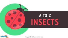 Take a look at the list of A to Z ofinsects in the world. Giant Weta is termed as the largest insect while Fairy flies are the world's smallest insects. More GK facts for Kids, visit: http://mocomi.com/learn/general-knowledge/