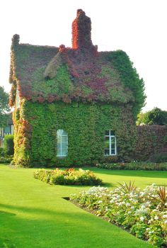 Gate Keepers Cottage covered in Boston Ivy beginning to turn red, Dartmouth Park, Sandwell, England