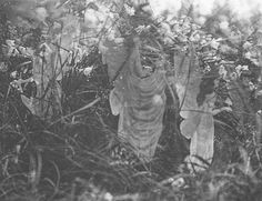 Long Read: The Cottingley Fairies – A Weird British Story of Myth and Hype With a Connection to Sir Arthur Conan Doyle Real Fairies, Types Of Fairies, Famous Photos, Old Photos, Troll, Dragons, Midsummer's Eve, Fairies Photos, Arthur Conan Doyle