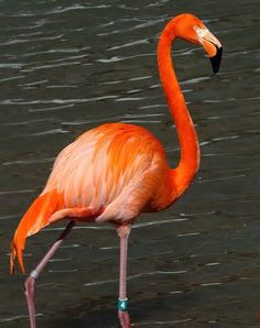 flamingo ~ beautiful color