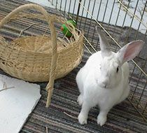 Rabbit Toys ~ homemade & around the house