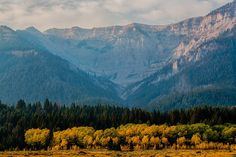 Fall Colors In The Centennial Mountains In Between Idaho & Montana