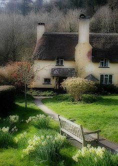 Daffodil cottage English village