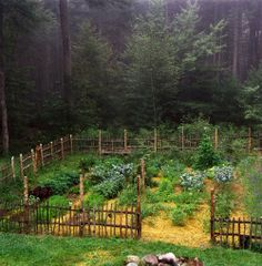 A garden at the edge of a forest - amazing!