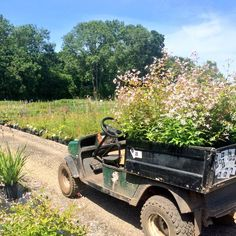 Buggies full of goodies all ready for Hampton Court Flower Show 2015