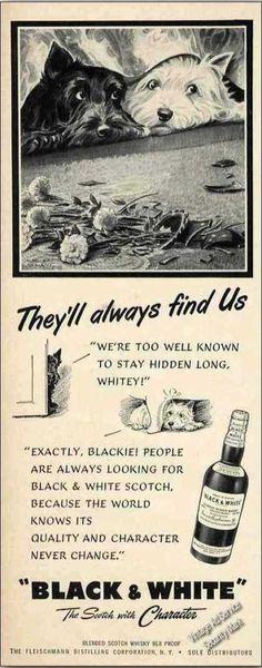 "B&w Scotch Terrier/westie ""They'll Always Find"" (1951)"