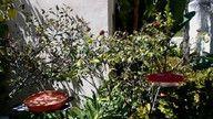LIVE Hummingbird Nest cam @ Orange County, California, USA.