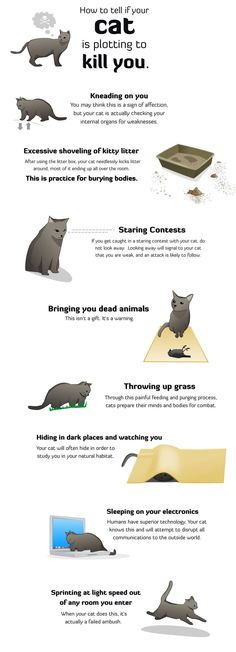 @Sidonie Dickson  I thought of you when I saw this.  IDK if your cats are trying to kill you, but I know of your recent contempt for them, haha!  How to tell if your cat is plotting to kill you!