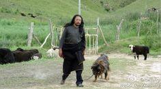 film Old Dog by Pema Tseden