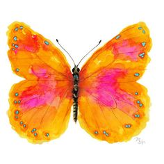 Tangerine Pink Butterfly Wall Art- Modern Watercolor Painting... ❤ liked on Polyvore featuring home, home decor, wall art, butterflies, orange home accessories, butterfly wall art, butterfly paintings, pink wall art and pink flamingo painting
