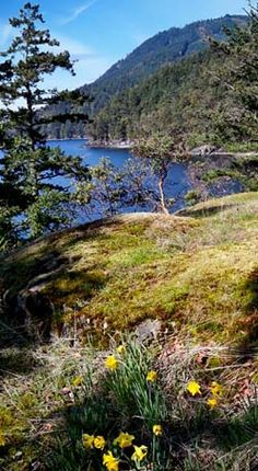 Salt Spring Island, British Columbia, Canada. (Great-Grandma Shandro's home, and what an oh-so-relaxing place!)