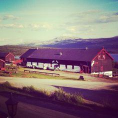 """@rikkekalsveen's photo: """"Hei Hjerkinn  #mountains #hjerkinn #horses #dovrefjell"""""""