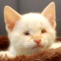 Duncan - an adorable blind kitty rescued by Northeast Animal Shelter (a no-kill shelter) - the link takes you to his story...