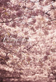 What I see, via Flickr. Tulipifera.virb.com