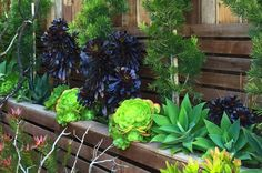 Landscaping — SQUARED ROOT LANDSCAPING & DESIGN Pebble Landscaping, Succulent Landscaping, Front Yard Landscaping, Planting Succulents, Artificial Grass For Dogs, Artificial Turf, Wisteria Plant, Hardy Geranium, Drought Tolerant Garden