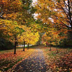 Fall leaves beatitude.🍁🍂🍃