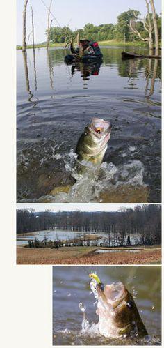 Deer Creek Lodge - kentucky trophy lake bass fishing me and Eric gots to go here