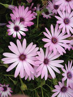 Pretty flowers, perfect garden.