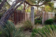 dry garden with grasses, clipped shrubs, windswept trees, open wood fence – wabi… – Australian Landscaping Bush Garden, Dry Garden, Garden Shrubs, Fence Garden, Coastal Gardens, Beach Gardens, Outdoor Gardens, Coastal Landscaping, Modern Landscaping