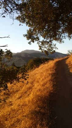 Mt. Diablo Hills