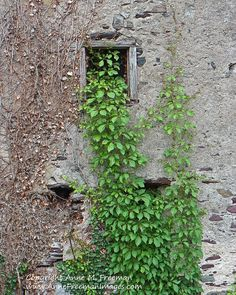Rustic Barn Window with Ivy Print now available on my Etsy Shop! Barn Window  Window  Stone Barn  Ivy  Rustic by AnneFreemanImages