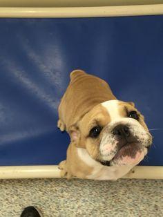 How cute is Vinnie?? #barkaritavillepetresort