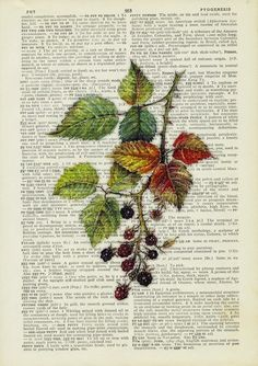 blackberry painting printed onto old page from vintage by FauxKiss