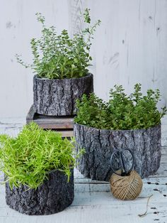 Taking their cue from the textures of the Scandinavian forest, our rustic flowerpots have heaps of natural charm and a myriad uses. Forest Garden, Woodland Garden, Garden Art, Garden Design, Balcony Garden, Garden Planters, Log Planter, Rustic Gardens, Outdoor Gardens
