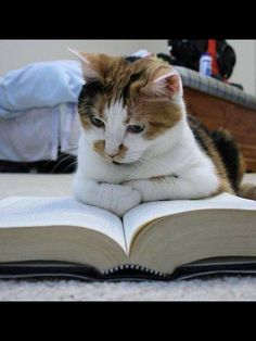 reading up on how to make sure my dog friends behave politely!Im reading up on how to make sure my dog friends behave politely! I Love Cats, Crazy Cats, Cool Cats, Baby Animals, Funny Animals, Cute Animals, Pretty Cats, Beautiful Cats, Cute Kittens