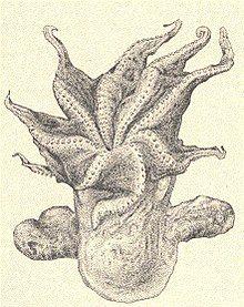 Drawing of an octopus. Deep Sea, Halloween, Octopus, Drawings, Animals, Animales, Animaux, Sketches, Animal