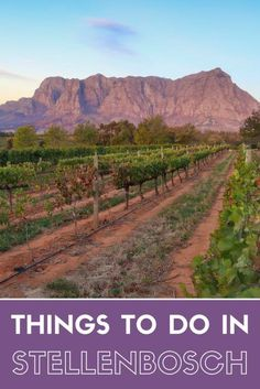 Things to do in Stellenbosch Beyond the Wine!    South Africa Travel