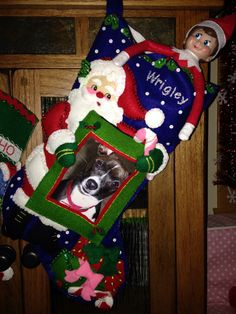 Day 18, 2013 - Sprinkle hides in our dog's stocking - Elf on the Shelf Idea - Preschool Christmas Activity