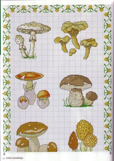 cogumelos gráfico, encontrado na net