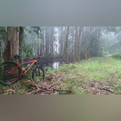 This is my Ned Overend Carve single speed mtb in the Cape Otway National Park near Apollo Bay. It is my favourite of the bikes I own. The mtb legend Ned Overend after whom the bike is named is in Australia.  He will be riding at Buxton  this Saturday. Keep an eye on the @Specialized_au Instagram account for more details.  I will be in Forrest so will miss out.  #nedoverend #Buxton  #singlespeed #mtb #mountainbike  #mtblife #bicycle #29er #bike #Instabike #igersmtb  #mtbporn  #cycling…