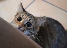 à la chasse   me fait penser au chat Potté dans shrek  :p