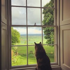 Poff isn't birdwatching. He's on the look out for his girl-cat crush - a pretty little Bengal who lives across the field Instagram via charlotte_anne fidler