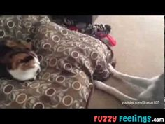 Cats Stealing Dogs' Beds