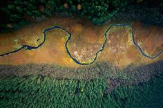 Kacper Kowalski's Mesmerizing Photos Of The Polish Forest From Bird's Eye View