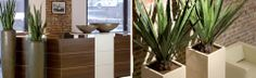 Plants can change the atmosphere of a reception area from good to amazing!