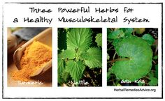 7 Tips for a Healthy Musculoskeletal System from Herbal Remedies Advice with Rosalee