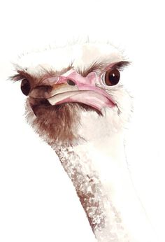 Ostrich watercolor Painting O008 nature wildife por Splodgepodge