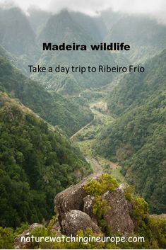 Madeira – The Laurel Forest at Ribeiro Frio – Nature-watching in Europe Europe Travel Outfits, Europe Travel Guide, Europe Destinations, Trout Farm, Forest Plants, Forest Park, Day Trip, Cranesbill Geranium, European Languages