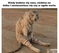Beka z Człowieka - Strona 2 z 110 - Very Funny Memes, True Memes, Wtf Funny, I Dont Know Anymore, Parents Be Like, Funny Mems, Parenting Memes, Life Humor, Animal Memes