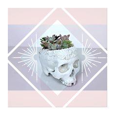 The Indi Skull #etsylove #etsyaddict #etsygifts #etsyshop #plantpower #indian #indianskull #skull #skullplanter @happyplanters @exclusivelyetsy @eliteetsy @etsytribe @etsyhunter @etsysuccess