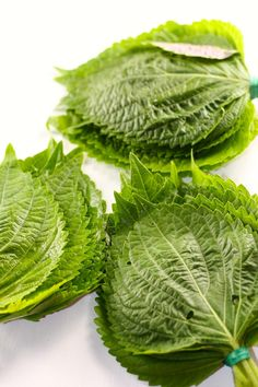 You searched for Perilla - Explore Cook Eat Zucchini Side Dishes, Veggie Side Dishes, Shiso Recipe, Korean Food, Korean Bbq, Korean Side Dishes, Fancy Dishes, Pickled Radishes, Kimchi Recipe