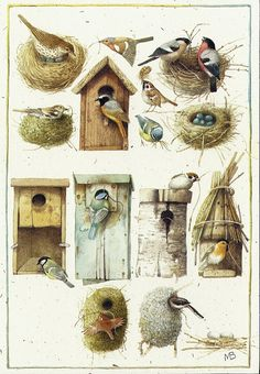Homes and nests of birds - Illustrations (c) Marjolein Bastin Marjolein Bastin, Nature Artists, Nesting Boxes, Dutch Artists, Bird Art, Bird Feathers, Beautiful Birds, Pretty Birds, Bird Houses