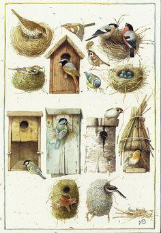 Homes and nests of birds - Illustrations (c) Marjolein Bastin Decoupage, Marjolein Bastin, Nature Artists, Dutch Artists, Bird Art, Bird Feathers, Beautiful Birds, Pretty Birds, Bird Houses