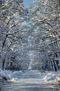 Snowy Alexandria park, Bila Tserkva, Ukraine photo 22