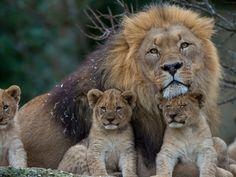 1400x1050 Wallpaper lion, lioness, young, family, predators