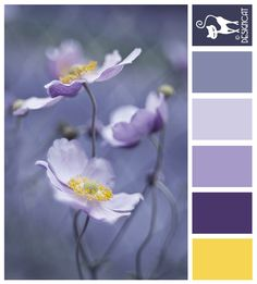 Wild Flowers - Dusky purple, lilac, slate blue, grey, yellow - Designcat Colour Inspiration Pallet
